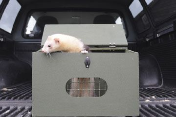 Ferret is a Carry Box